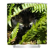 Blackie In The Ferns Shower Curtain