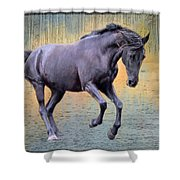 Blacks Danse Shower Curtain