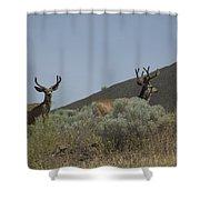 Blacktail Deer 2 Shower Curtain