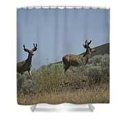 Blacktail Deer 3 Shower Curtain