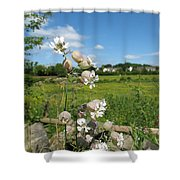 Bladder Campion On Stone Wall Shower Curtain