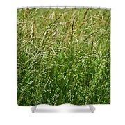 Blades Of Grass Shower Curtain