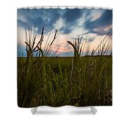 Blades Of Sunset Shower Curtain