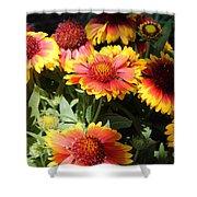 Blanket Flowers Shower Curtain