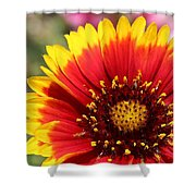 Blanket Of Petals  Shower Curtain