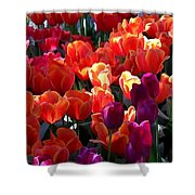 Blankets Of Tulips Shower Curtain