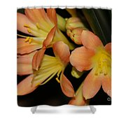 Blast Of Sunshine Shower Curtain
