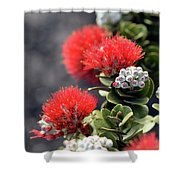 Blazing Blooms Of Ohia Flowers Shower Curtain