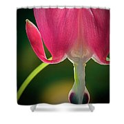 Bleeding Heart Macro Shower Curtain