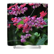 Bleeding Heart Vine Shower Curtain