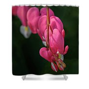 Bleeding Hearts Flowers Shower Curtain