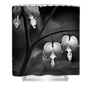 Bleeding Hearts In Bw Shower Curtain
