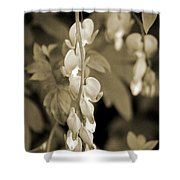 Bleeding Hearts In Sepia Shower Curtain