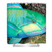 Bleekers Parrot Fish Shower Curtain