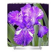 Blended Beauty - Bearded Iris Shower Curtain