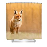 Blending In Or Standing Out - Red Fox And Yellow Reed Shower Curtain