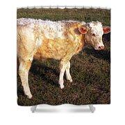 Blond Calf Shower Curtain