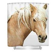 Blonde Stallion Shower Curtain