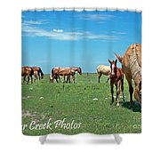 Blondes, Brunettes And Redheads Shower Curtain