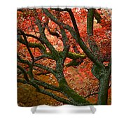 Blood Red Autumn Tree Shower Curtain