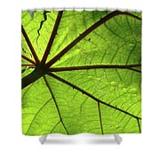 Blood Red Feeder Shower Curtain