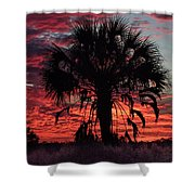 Blood Red Sunset Palm Shower Curtain