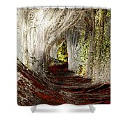 Blood Redwoods Shower Curtain