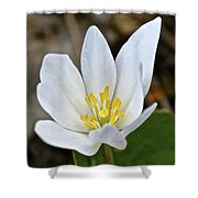 Bloodroot 3 Shower Curtain