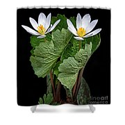 Bloodroot Duo Shower Curtain