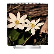 Bloodroot In Spring Shower Curtain