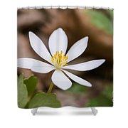 Bloodroot Wildflower Shower Curtain