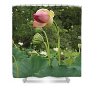 Bloom Among The Pods Shower Curtain