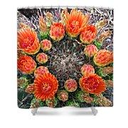 Blooming Barrel Cactus Shower Curtain