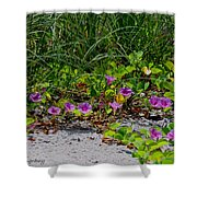Blooming Cross Vines Along The Beach Shower Curtain