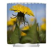 Blooming Dandelion Flower Shower Curtain