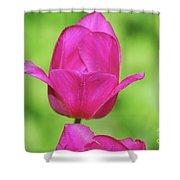 Blooming Dark Pink Tulip Flower Blossom In A Garden Shower Curtain