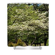 Blooming Dogwood Shower Curtain
