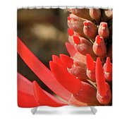 Blooming Fire Spike Shower Curtain