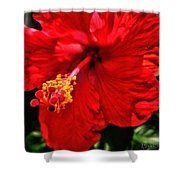 Blooming Flower 2 Shower Curtain