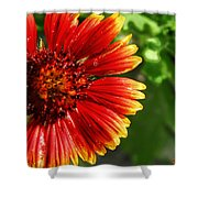 Blooming Flower Shower Curtain