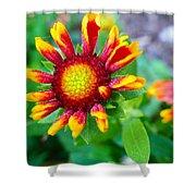 Blooming Gaillardia Shower Curtain