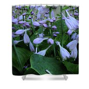 Blooming Hosta Shower Curtain