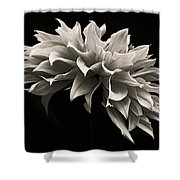 Blooming II Shower Curtain