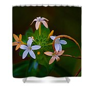 Blooming Joy Shower Curtain