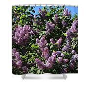 Blooming Lilacs Shower Curtain