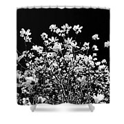 Blooming Magnolia Tree Shower Curtain
