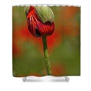 Blooming Orange Poppy Shower Curtain