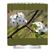Blooming Pear Tree Shower Curtain