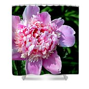 Blooming Peony Shower Curtain