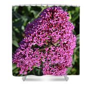 Blooming Pink Phlox Flowers In A Spring Garden Shower Curtain